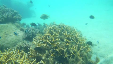 Tropical underwater life Stock Video Footage
