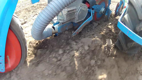 Planting a new maize crop Footage