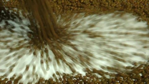 Cascading Mung Beans stock footage