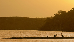 Pelicans Perched on the Moore River at Sunset Stock Video Footage