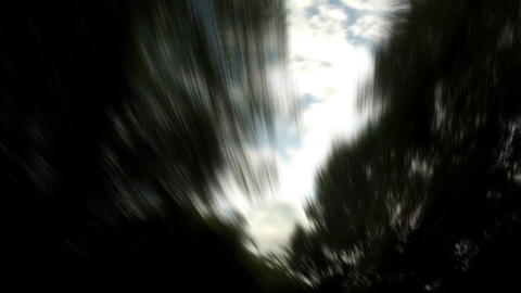 Tree travelling 01 Stock Video Footage
