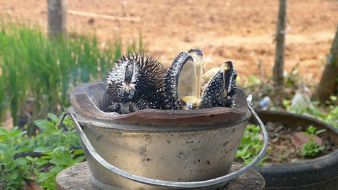 Durian bbq Live Action