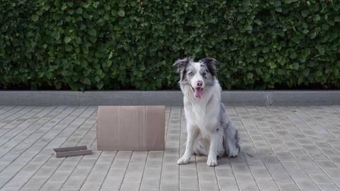 Dog seats on the street near cardboard for money ビデオ