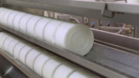 Cheese molds in a line with curd cheese inside, on the press machine in a dairy ライブ動画