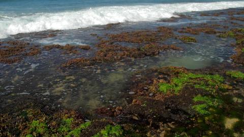 foaming ocean waves roll on green and brown seaweed Footage