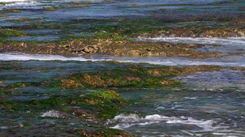 strong ocean waves wash green seaweed and brown coral reefs Footage