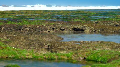 huge foaming ocean waves wash green seaweed and coral reefs Footage