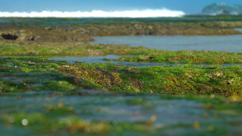 green seaweed without water against blurry foaming waves Footage