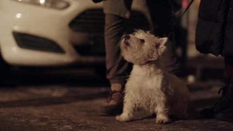 Beautiful small white dog stand next to owner outside in cold winter street Footage