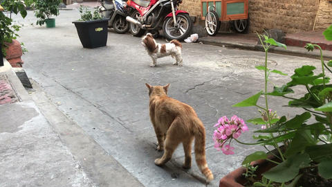 epic fight between dog and cat on the street outside Stock Video Footage