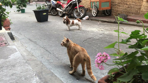 epic fight between dog and cat on the street outside Live Action