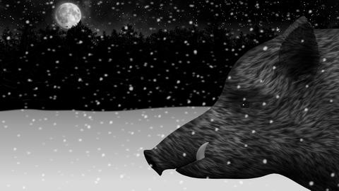 Wild boar in a night snowy winter forest animation Live Action