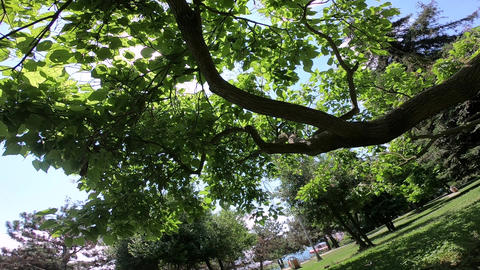 Beautiful POV view of the trees GIF