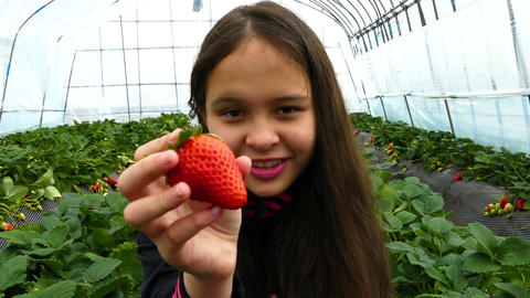 Young girl holding strawberry in greenhouse Live影片
