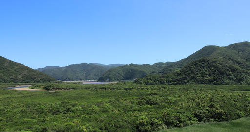 Mangrove forest in Amami oshima Kagoshima sunny day panning Footage