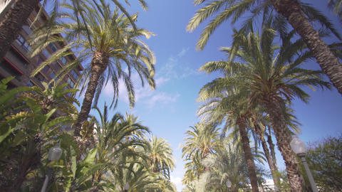 Palm alley in the park. Walk between the palm trees in the park, the view from Footage