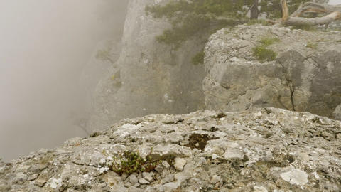 Nature landscape with lonely green coniferous tree on edge of cliff in fog Footage