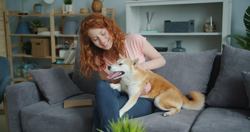 Attractive woman caressing cute shiba inu dog sitting on couch in apartment Footage
