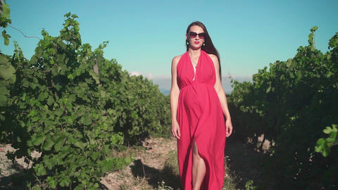 A pregnant girl in a red dress is walking through the vineyard. A pregnant girl Footage