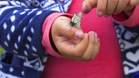 Butterfly sitting on the child palm Footage