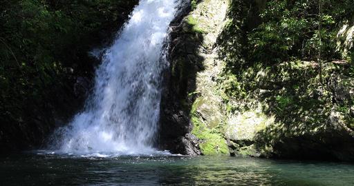 Materiya waterfall in the green forest in Amami oshima Kagoshima sunny day Footage