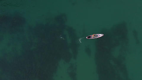 Aerial drone top view. Man sup surfing on rowing supboard on perfect sea surface. Paddle leaving Footage
