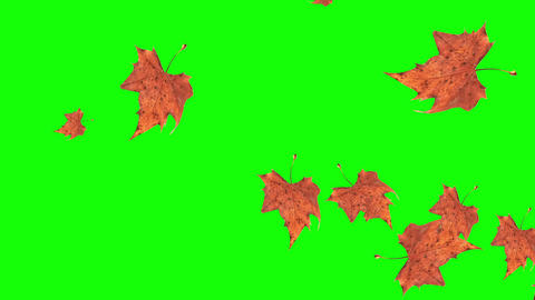 Falling autumn leaves on green background Animation
