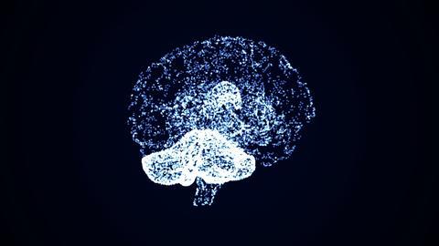 Brain 05 Animation