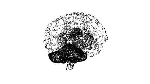Brain 14 Animation