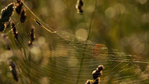 Spider weaves a web Footage