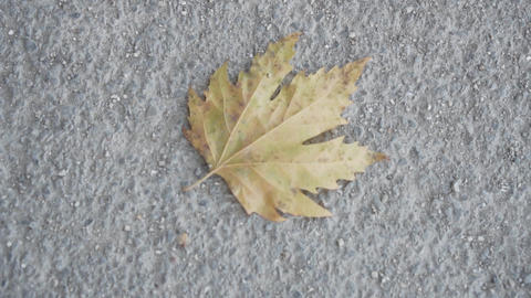 Closeup of dry yellow maple leaf on an old concrete road. Autumn theme, single Live Action