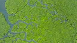 Aerial view of Mangrove forest and river Stock Video Footage