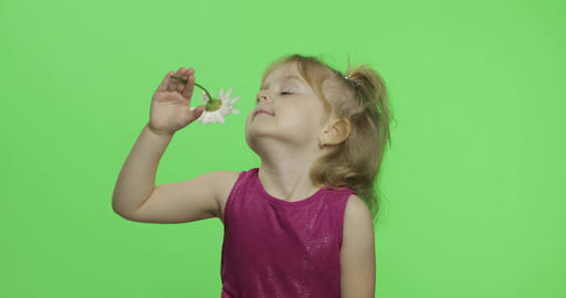 Girl holds chamomile flower and sniffs. Happy four years old girl. Chroma Key Live Action