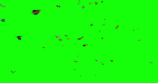 Isolated Butterflies Swarm Animation