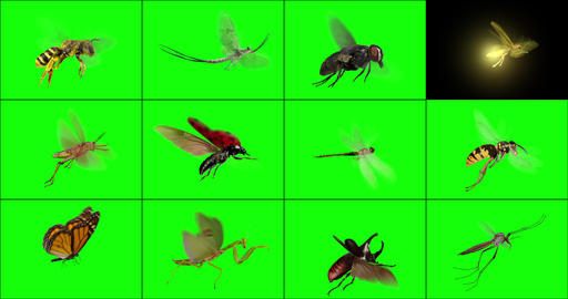 Flying Insects Animation