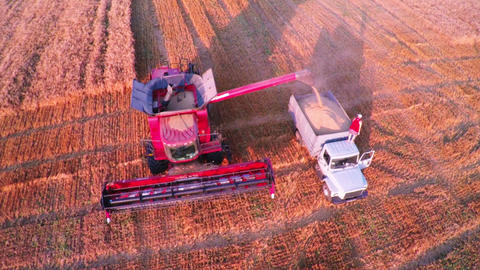 Aerial View Combine Harvester Gathers the Wheat Footage