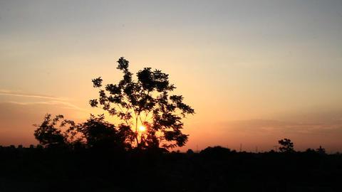 sun shines through the trees Footage