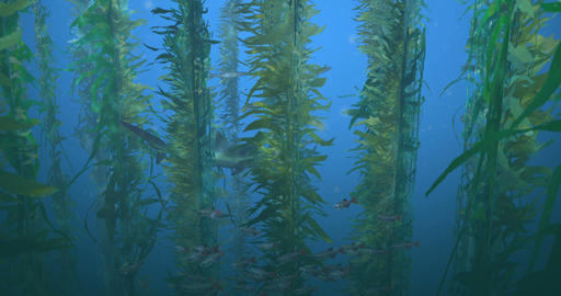 Fish and Shark in Kelp Forest Animation