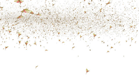 Locust Swarm Animation