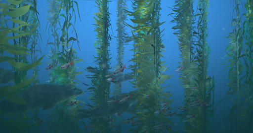 Seals in Kelp Forest Animation