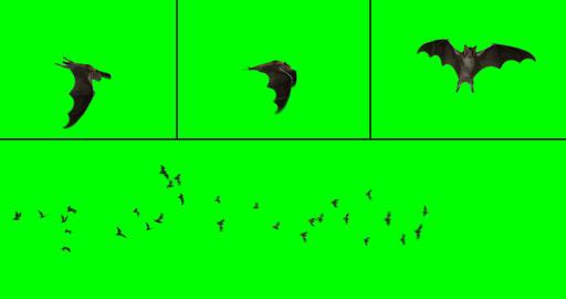 Bat Colony CG動画