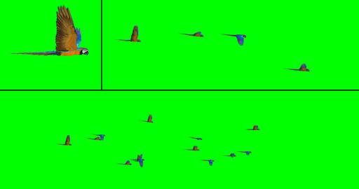 Flock of Birds - Macaws CG動画