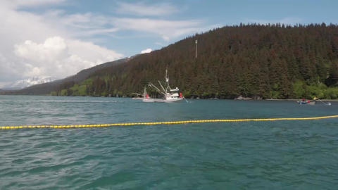 Commercial salmon fishing in Alaska Live Action