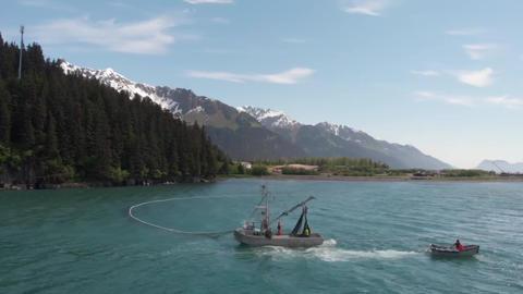 Summer salmon fishing in Alaska Live Action