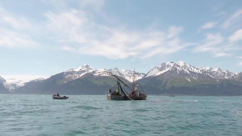Battling for salmon in Alaska Live Action