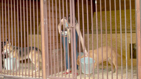 Volunteer in a dog's cage Live Action