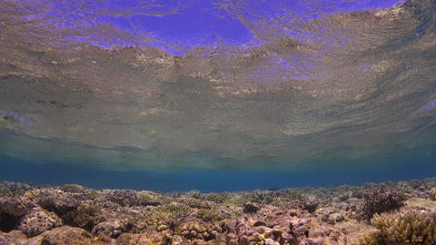 Waves of Sea Over the Coral Reef Footage