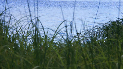 Sedge and the ripples on the water Footage