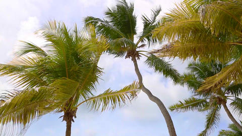 Tropical palm trees in the wind ビデオ