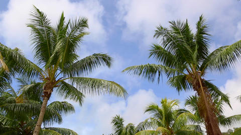 Tropical green palm waving in the wind Live Action